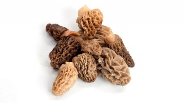 Morilles entieres sauvages - 0018970 - PassionFroid - Grossiste alimentaire