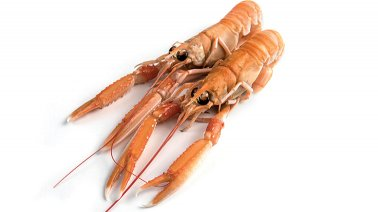 Langoustine entiere crue 10/15 8 Beaufort Silver - 0187920 - PassionFroid - Grossiste alimentaire